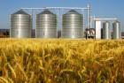Компания Agro-Mir закупает 2, 3 класс пшеницы