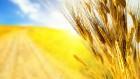 упим кукурузу,пшеницу,гречку,сою,рапс,рожь,¤чмень любого качества!!!