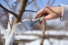 краска дл¤ плодовых деревьев от зайцев