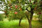¬осстановление садов и повышение их урожайности