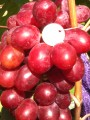 Предлагаю саженцы и черенки винограда.