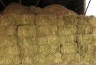 продам сено луговое без предоплат 55 гр