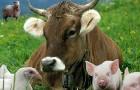 """Ѕаза животноводство """"краины 2018"""