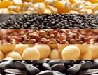 Продам насіня кукурудзи