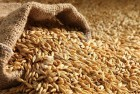 куплю зерновые любого качества оптом