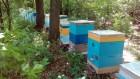 –аспродаю пчел. —рочно продам пчел улики пчелосемьи ульи бджоли.