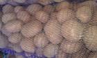 Продам семенной картофель Ривьера и др.