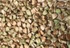 Продаю гречиху зеленую.Урожай 2017 года. 30 грн/кг