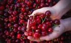 Продам фрукты( ассортимент подробнее по телефону)