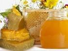Предприятие покупает пчелиный мёд