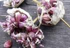 Семена чеснока (воздушка) 100% всхожесть