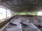 Реконструкція споруд АПК та монтаж ВК для корівників, свинарників