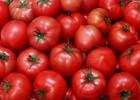 Продам томаты 1 – го сорта