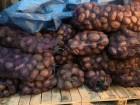 картофель,сорт Беларосса