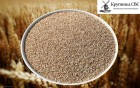 Крупа пшеничная от производителя
