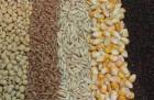 Предлагаю услуги по поиску зерновых у фермеров и хозяйств.