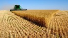 Закупаем Пшеницу в Донецкой,Луганской обл.харьковской расмотрим