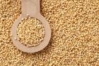 ѕокупаем зерно амаранта дорого в неограниченном количестве