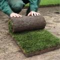 Осуществляем   продажу рулонного газона