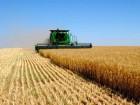 Закупаем пшеницу и ячмень по высокой цене