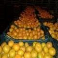 продам мандарин грузинский