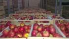 Продается яблоко оптом от производителя