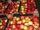 Продам яблоко от 3 тонн