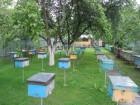 "Пчеломатки (бджоломатки) ""Карпатка"" и пчелопакеты (бджолопакети)"