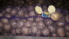 Купить семенной картофель Ривьера и Белароза