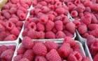 Продам ягоду малини