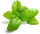 Базилик, свежий зеленый, оптом