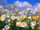 Лекарственные травы опт