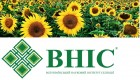 Предлагаем семена подсолнечника Сонячный настрий от производителя