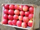 яблоко оптом от производител¤