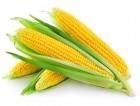 Купим кукурузу