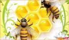 купуємо мед без антибіотиків