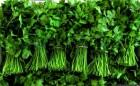 Недорого зелень в ассортименте: укроп, петрушка, руккола кинза, шпинат