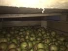 Продам грушу ноябрську