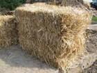 солома пшеничная  в тюках