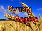 Пшеница 5, 6 кл. купим