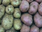 Продам картоплю на корм (дрібна)