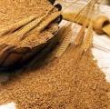 Закупаем пшеницу 2,3 класса