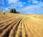 Купим пшеницу 3й кл, фураж в Одессе на условиях CPT