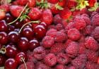 Закупаем ягоды вишни, малины, бузины, аронии, абрикос, сливу, грушу