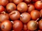 продам хороший херсонский лук  оптом  и в розницу  подходит для загот