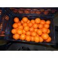 Продам мандарины Турция Грузия доставка по Украине от 500 кг