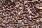 Продам семенную гречиху канадского сорта Дикуль