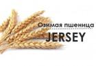 семена ќзима¤ пшеница ƒжерси/JERSEY (анада)