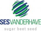 Насіння цукрового буряка SESVanderHave Бельгія