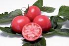 Салат Айсберг и др. Огурец, помидор, редис тепличные. Мята, Бази